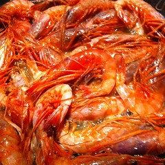 shrimp, animal, dendrobranchiata, caridean shrimp, crustacean, seafood, invertebrate, food, dish,