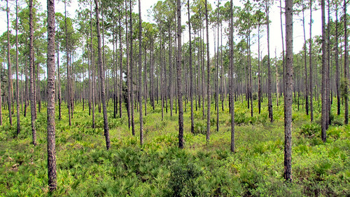 tree nature forest florida widescreen canonsx30is bayardconservationarea