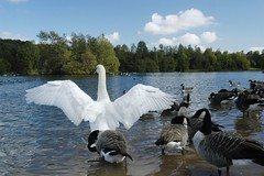 Wildlife in Salford's Green Flag Award winning Clifton Country Park