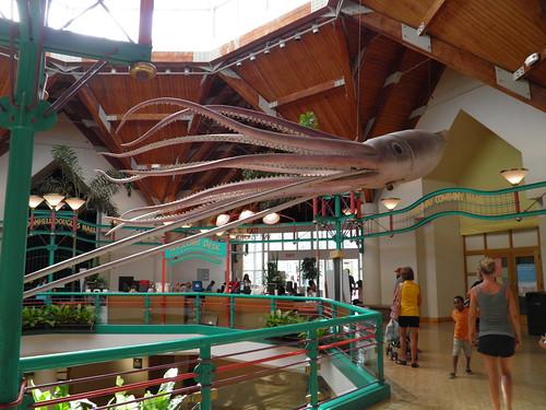 giant squid @ St. louis zoo
