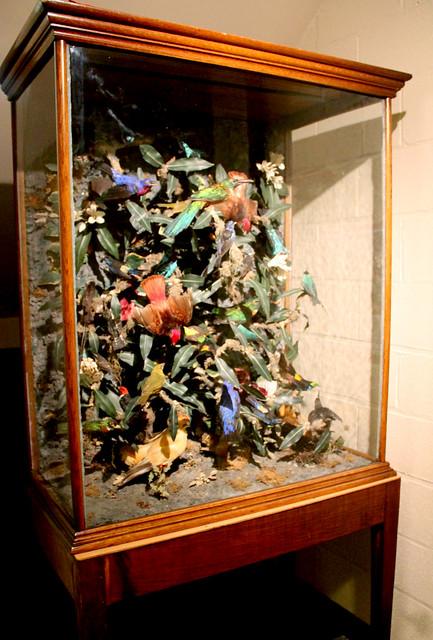 Victorian Taxidermy Bird Display Flickr Photo Sharing