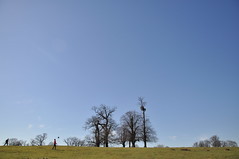 Knole Park skyline