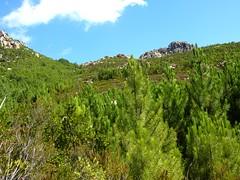 Castellu Muratu : le versant Ouest depuis la fin de la piste de Castellu Muratu