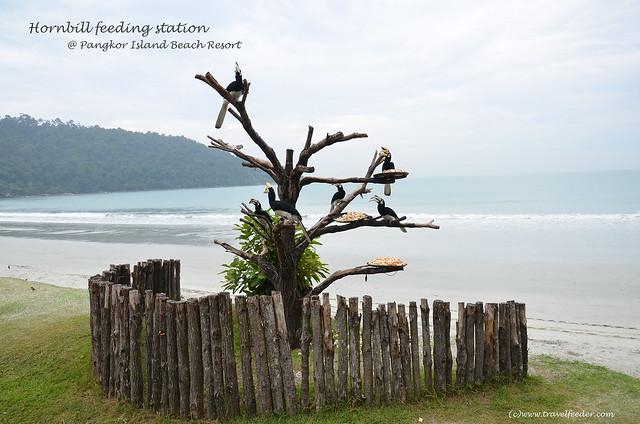 Pangkor Island Weather February