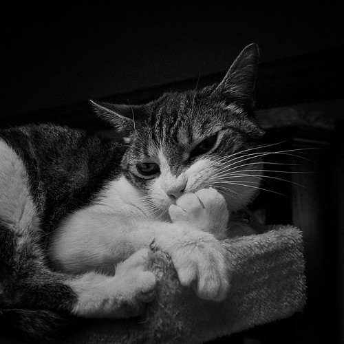 I think, therefore I am ... a cat. (B&W)