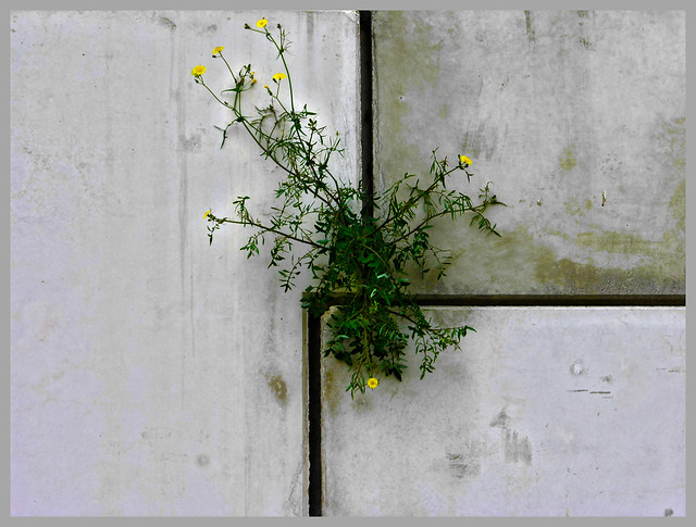 flor en pared  Wall Flower