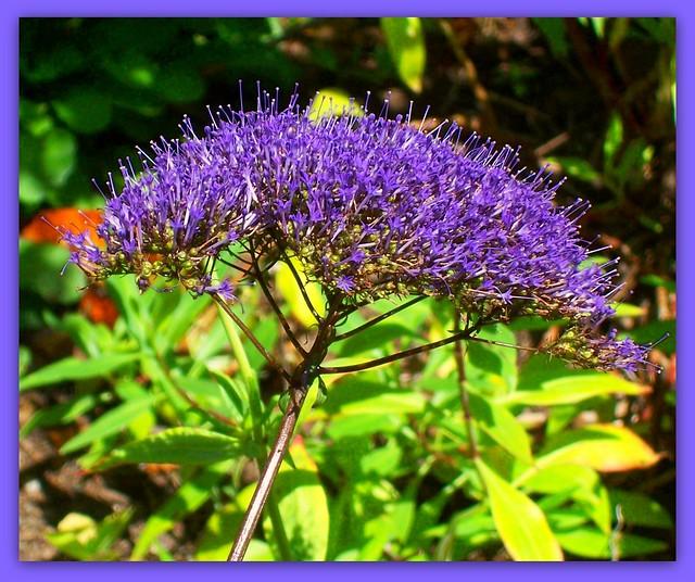 Butterfly Garden Balboa Park San Diego Ca Flickr