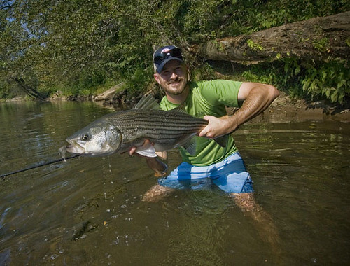 Picture of the day summer in the city orvis news for Matthews fishing report