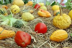 plant(0.0), dish(0.0), easter egg(0.0), autumn(0.0), vegetable(1.0), produce(1.0), food(1.0), gourd(1.0),
