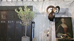 SALOTTO Habitaressa: Antiikkikahvila Pehtoori