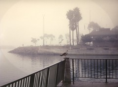 Foggy Morning, Dana Point, CA 1994