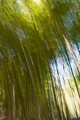 Impression, Bamboo Forest – Séptima