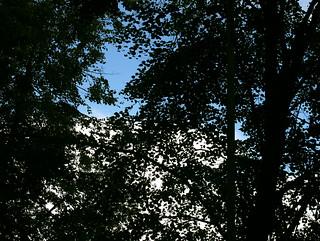 (231/365) Trees
