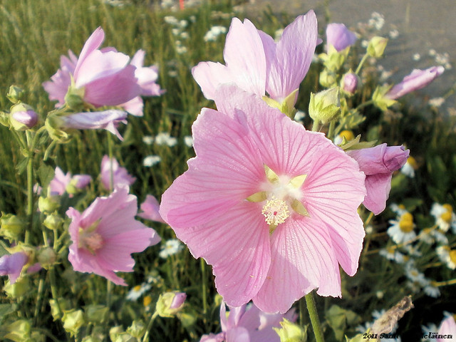 Kukkia - Joensuu