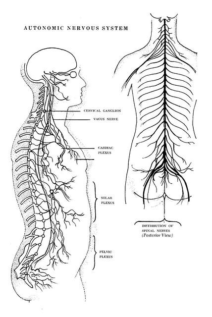 Yoga For Nervous System
