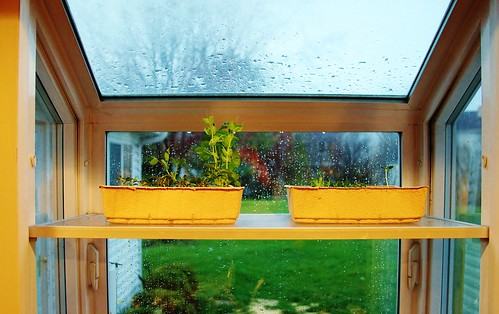 Box Window Garden