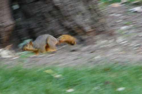 83/365/1178 (September 2, 2011) – Squirrels at the University of Michigan