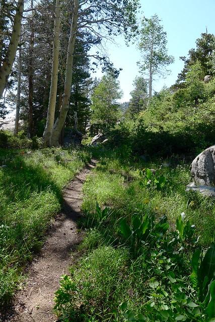 Kerrick Canyon