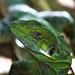 Iguana por Daniel VMV