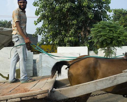 Amritsar Horse & Man