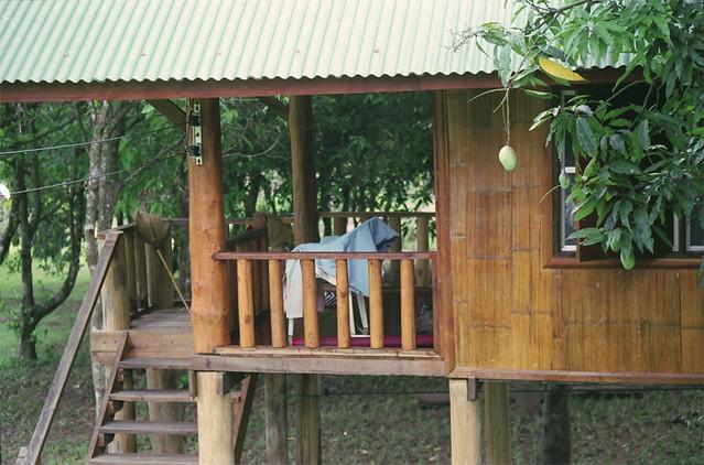 dom-soseda-pod-derevom-mango