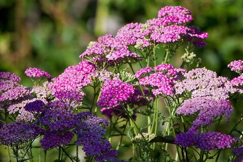 Acadia Valley B&B: Flowers in garden