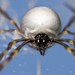 Golden orb weaver by www.stonemeadow.com.au