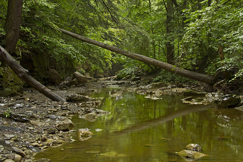 life summer reflection green nature water forest canon stream quiet peace peaceful glen oasis waterfalls getty upstatenewyork gorge growing dense 2011 unionspringsny forested lushgreen lushgorge greatgullyglen northeasternwoods