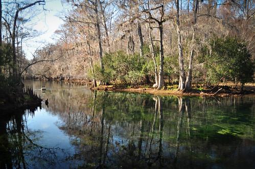 statepark park winter water spring florida clear springs freshwater manateesprings