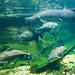 Amazonia Exhibit Large Tank