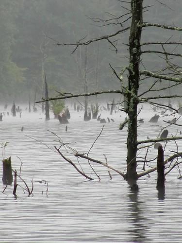 morning trees mist lake nature cemetery graveyard fog virginia fishing trunks skeletal drown wma casualty princeedwardcounty brierycreekwildlifemanagementarea