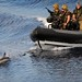 Dolphin Catches the Bow Wave of Royal Navy Rigid Inflatable Boat