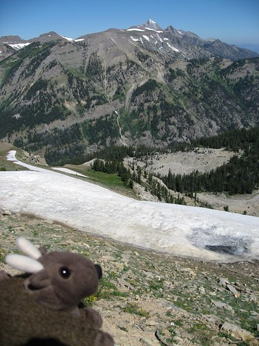 Buddy Bison in the Grand Tetons, WY