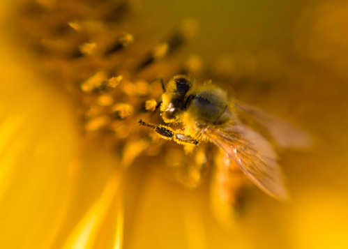 Busy Bee by Krista Kruger