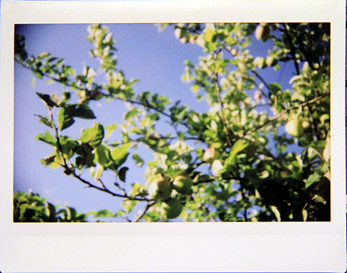 fujifilm: apple tree