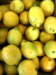 plant(0.0), citrus(1.0), lemon(1.0), key lime(1.0), meyer lemon(1.0), persian lime(1.0), yuzu(1.0), produce(1.0), fruit(1.0), food(1.0), tangelo(1.0), sweet lemon(1.0), bitter orange(1.0), citron(1.0), lime(1.0),