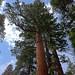 Yosemite - Aug 2011 - 049