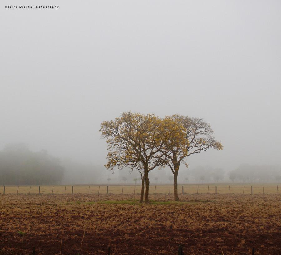 lapacho - niebla