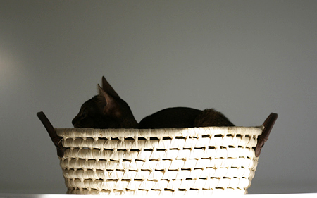 Basket_cat_0616