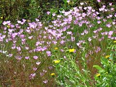 Larner Seeds