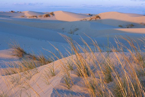 Evening at Monahans Sandhills State Park, TX (picture from Hidden Gems of the Western United States by Daniel Gillaspia)