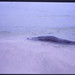 1993 EASA SHETLAND 05