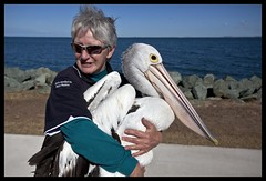 Hammy's Pelican and Seabird Rescue