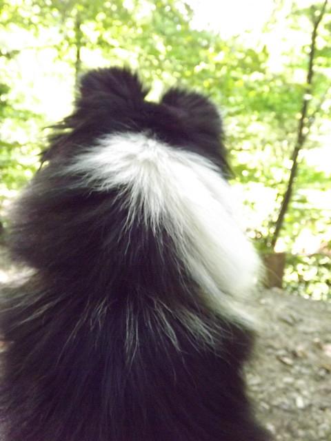 A vista de perro.