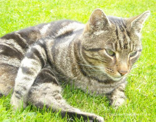 Mon, Aug 29th, 2011 Lost Male Cat - Parkstown View, Ballivor, Meath