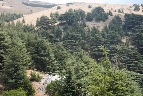 lebanon mountain tree nikon cedar chouf barouk d80