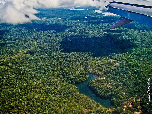 Floresta Amazonica   Flickr - Photo Sharing!