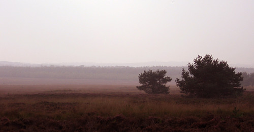 Heathlands @ NP Veluwezoom, The Netherlands