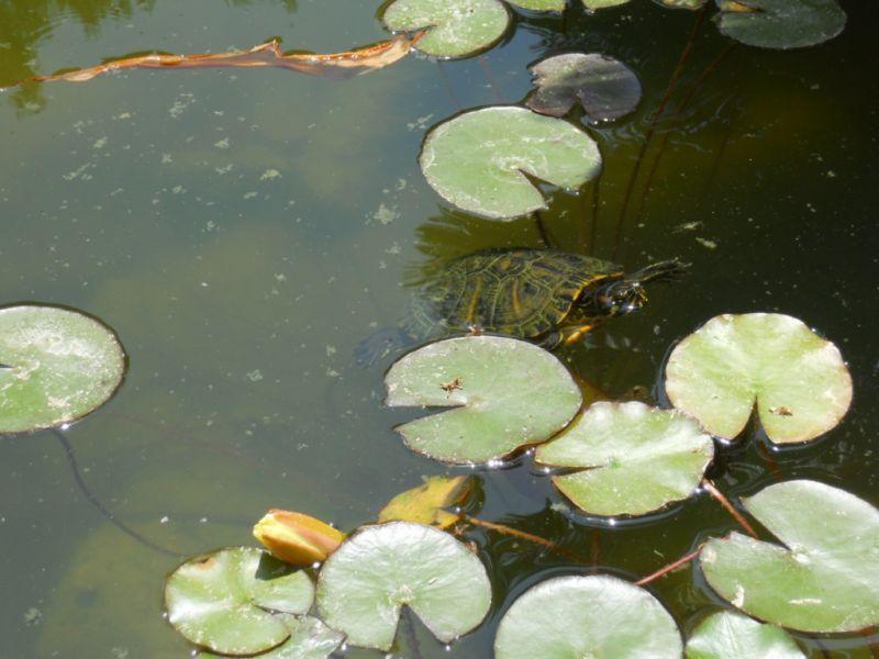 jardineros en acci n animales para el estanque