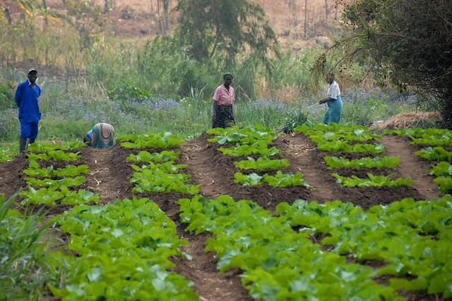 Farmers in Chiradzulu, Malawi